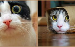 Istraživanja dokazuju: Gledanje komičnih video uradaka o mačkama je dobro za raspoloženje