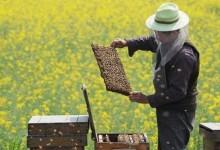 Udruga pčelara petkom navečer održava nekoliko predavanja