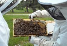 Ovog petka počinje ciklus predavanja za pčelare