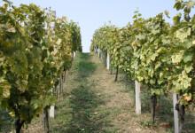 Predavanje o poljoprivredi, okolišu, klimatskim promjenama i ekološkom uzgoju 22. veljače u Zlataru