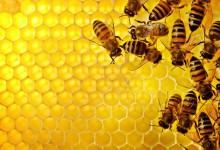"""U petak posljednje u nizu predavanja udruge pčelara """"Nektar"""""""
