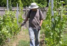 Tečaj u Održivoj uporabi pesticida