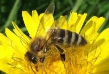 Na predavanju u Gradskoj knjižnici Pregrada saznajte kako med može očuvati vaše zdravlje i ljepotu
