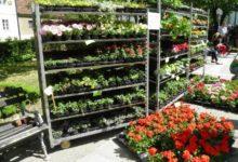 Sajam cvijeća u subotu od 10 do 16 sati
