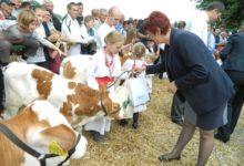 U subotu županijska izložba stoke i konja