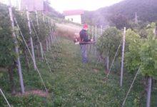 Predavanje na temu tretiranja i zaštite vinograda ovog utorka u Gradskoj vijećnici