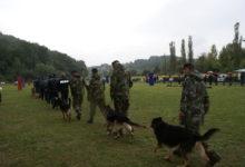 Psi će pokazati vježbe poslušnosti, pronalaska droge i eksploziva, savladavanja otmičara…