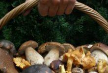 Sakupljanje gljiva, natjecanje u prepoznavanju gljiva i stručno predavanje