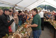 Branje gljiva, degustacije, glazba i ples