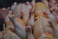 Građani kupuju meso staro 20 godina, a zagorski puran još se uvijek probija na tržište!