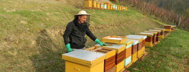 Iako imamo viška meda, loš, ali i patvoreni uvozni med preplavio je hrvatsko tržište