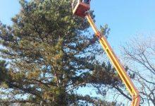 Okićen prirodni bor veličine 16 metara