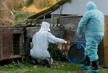 Kod 15 komada peradi pronađen virus ptičje gripe