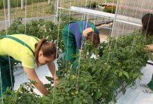 U Područnoj školi Krušljevo Selo uredit će se školski vrt i učionica na otvorenom