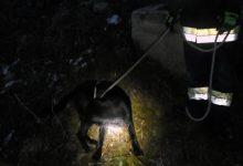 Vatrogasci iz četiri metra dubokog šahta izvlačili štenca labradora