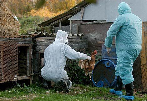Pokraj Velike Gorice zabilježen novi slučaj ptičje gripe