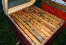 Uključite se u savjetovanje za Nacrt Pravilnika o provedbi mjera Nacionalnog pčelarskog programa