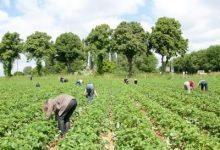 Raspisan natječaj za povećanje poljoprivredne proizvodnje