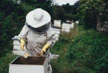 Za pčelare osigurano 51,6 milijuna kuna