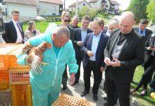 Obiteljima kojima je perad eutanazirana zbog ptičje gripe, podijeljeno 510 kokoši nesilica