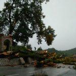Vjetar čupao i lomio stabla, zaštićena lipa kod crkve u Bednji pala na cestu, velik dio Zagorja i bez struje