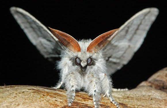 Otkrijte tajanstveni svijet noćnih leptira ovog utorka na radionici u Radoboju