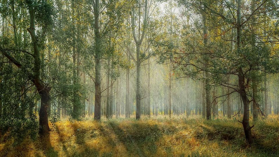 """U četvrtak u Krapini otvorenje izložbe 14. bjelovarskog salona fotografije """"Šuma okom šumara"""""""