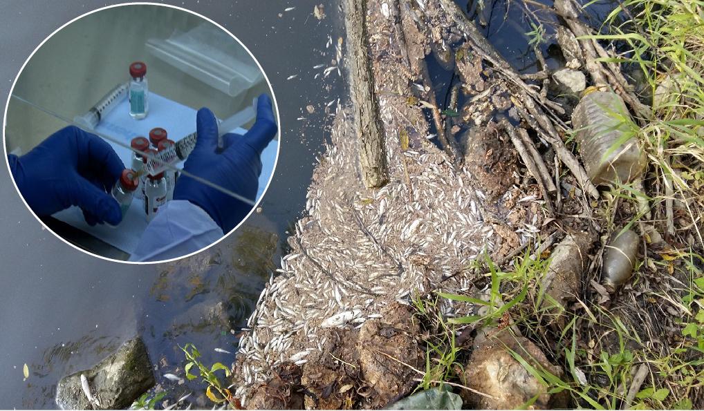 mjesto pretraživanja ribe swansea speed dating