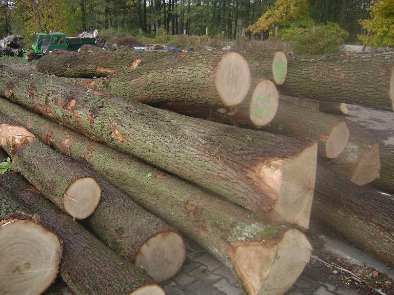 Prijavio 50-godišnjaka da mu je u šumi posjekao i potom odvezao desetak stabala – šteta nekoliko desetaka tisuća kuna