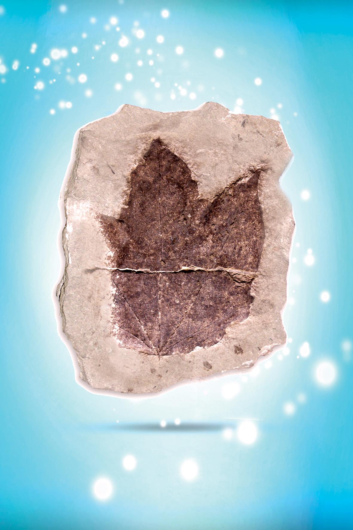 što se podrazumijeva pod fosilnim datiranjem 420 dating besplatno