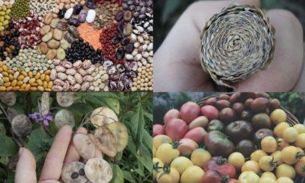"""""""SJEME KAO ZALOG NAŠE BUDUĆNOSTI"""": Doznajte zašto je važno sakupljati sjeme biljaka, kako sakupiti sjeme glavnih povrtnih vrsta i kako ga čuvati"""